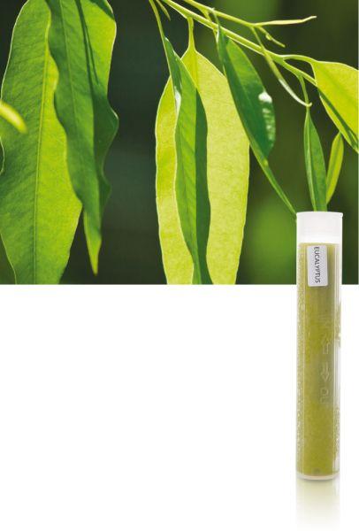 Aroma-VitaC-Gelfilter Eukalyptus für SPA Perfect/Max